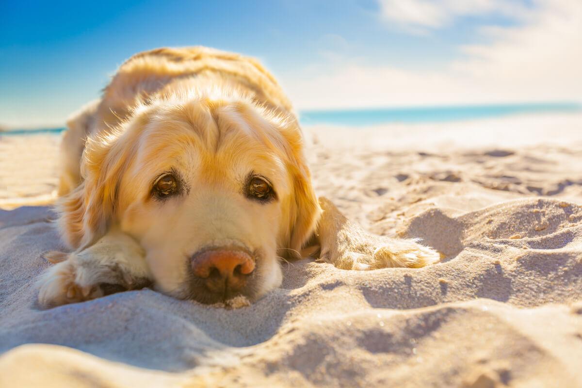 Un perro triste en la playa.