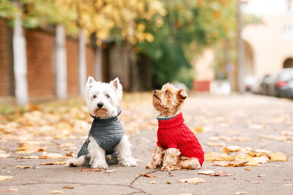 Unos perros alegres usando ropa.