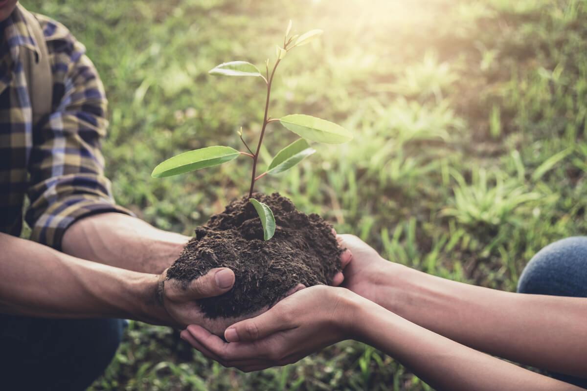 La resilvestración es esencial para mantener los ecosistemas.