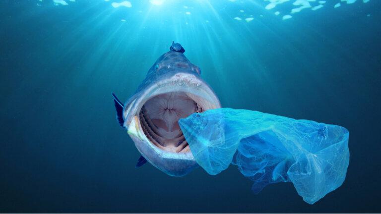 Los efectos de los plásticos sobre el océano