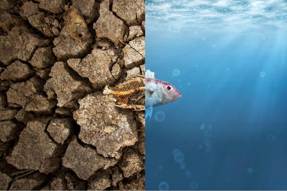 Un pez muerto por efectos de la sequía.