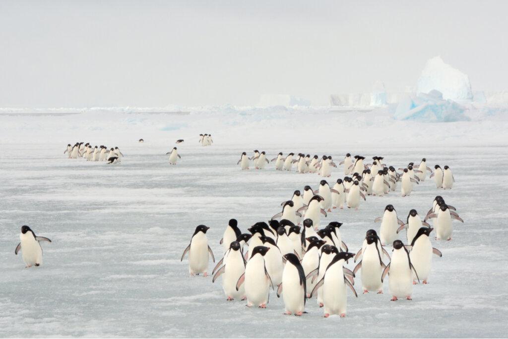 ¿Por qué migran los animales?