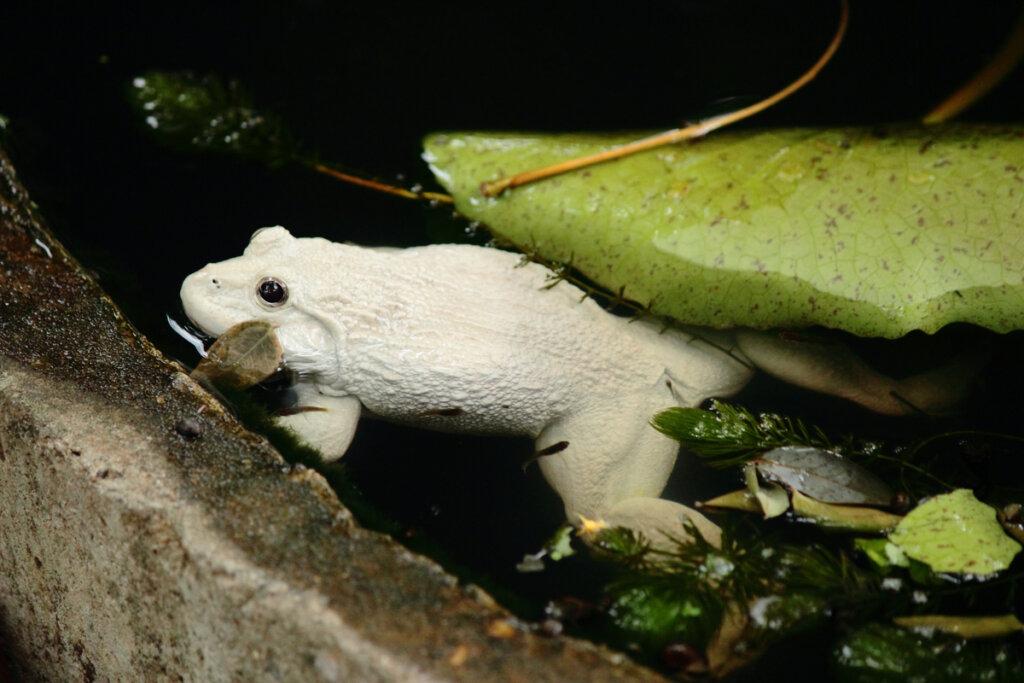 Albinismo en la naturaleza: ¿es viable?