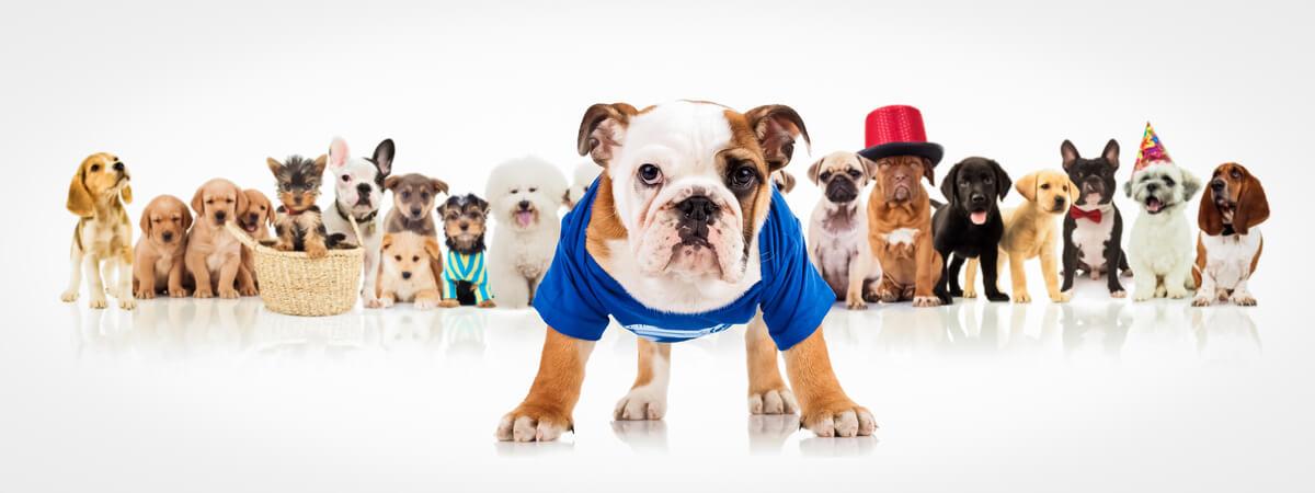 Los tipos de ropa para perros son muchos y diversos.