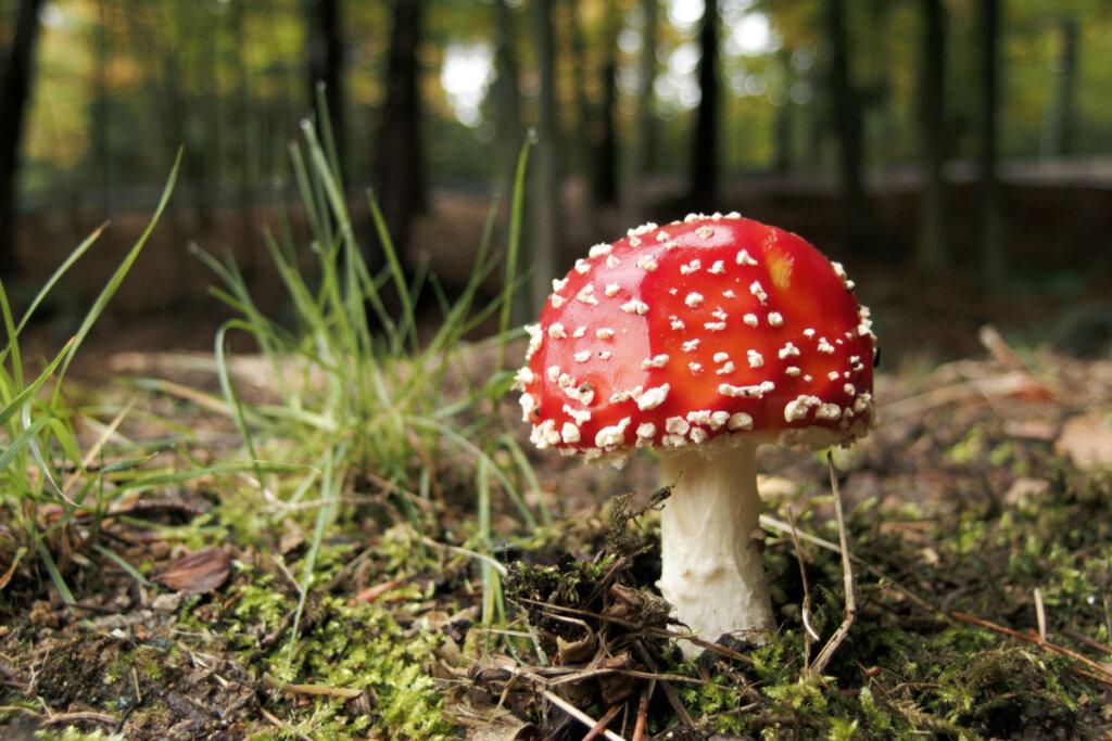 Hongos: ¿animales o plantas?