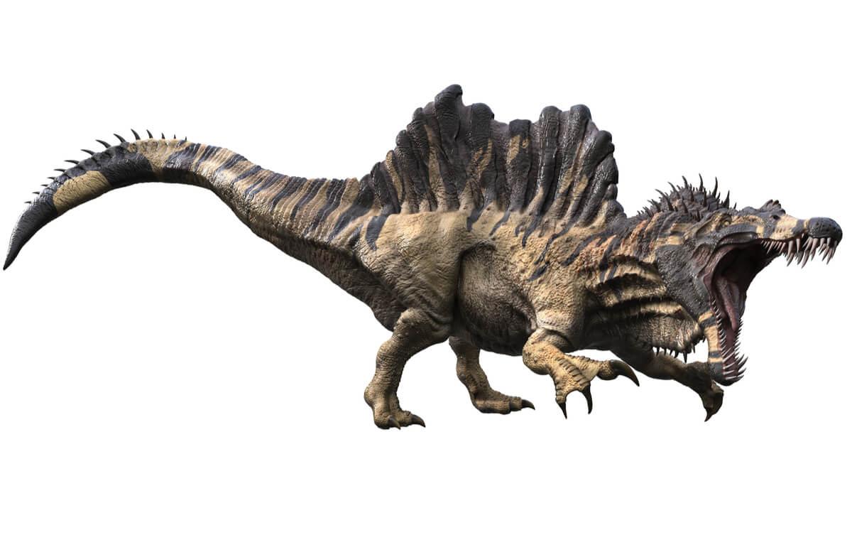 Un modelo de spinosaurus en pose de ataque.
