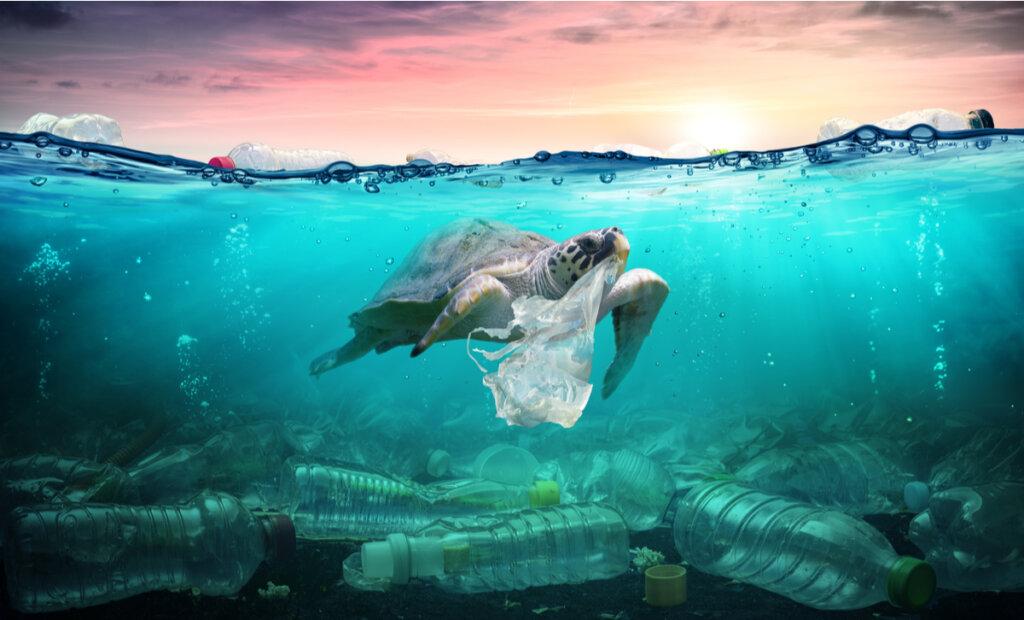 ¿Cómo afecta la contaminación en la vida marina?