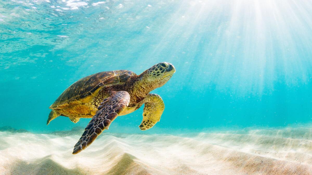 Las tortugas y su caparazón son entes inseparables.
