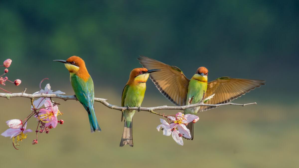 ¿Cómo se reconocen los pájaros entre ellos?