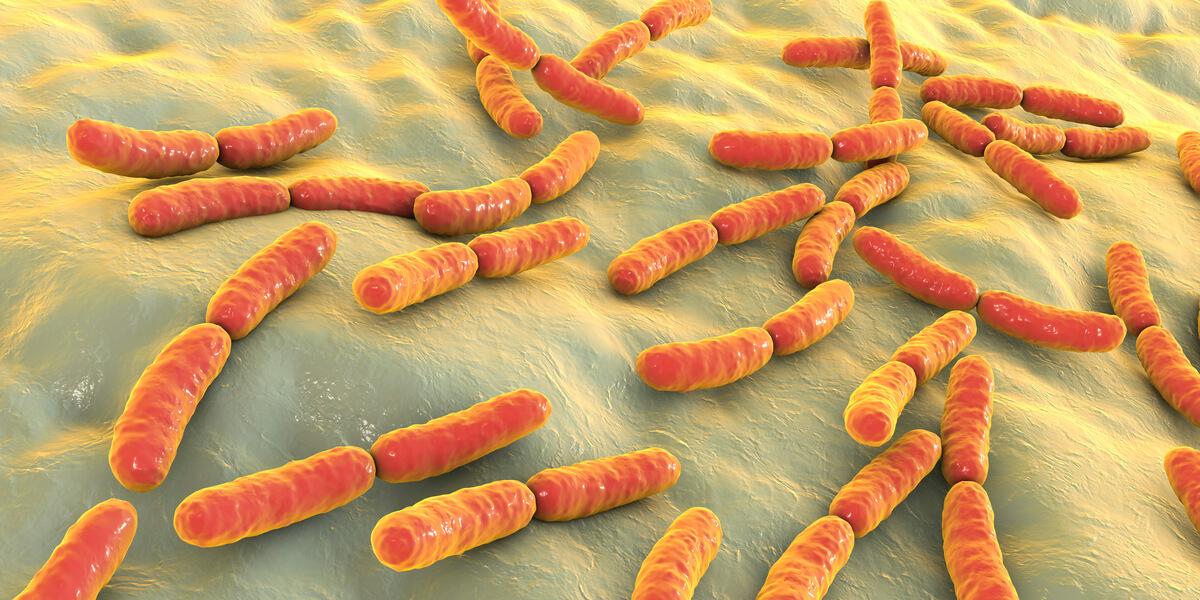 Las tres enfermedades bacterianas más comunes en perros.