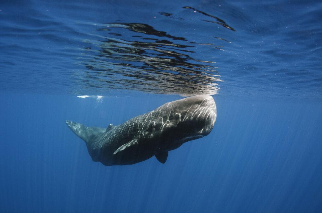 Una ballena fue salvada de una muerte segura