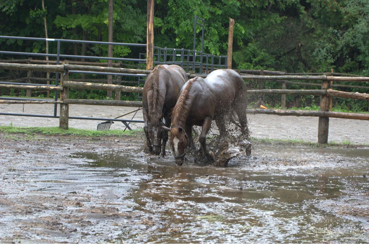 Caballos rescatados de una inundación dan a luz: el milagro de la vida
