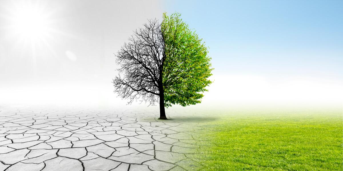 Un árbol sufriendo los efectos del cambio climático.