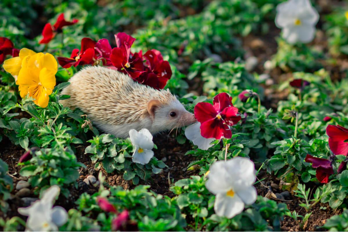 Un erizo en un campo de flores.