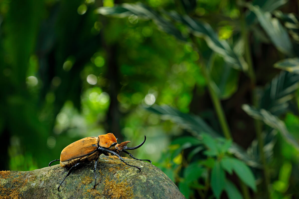 Un escarabajo elefante sobre un tronco.