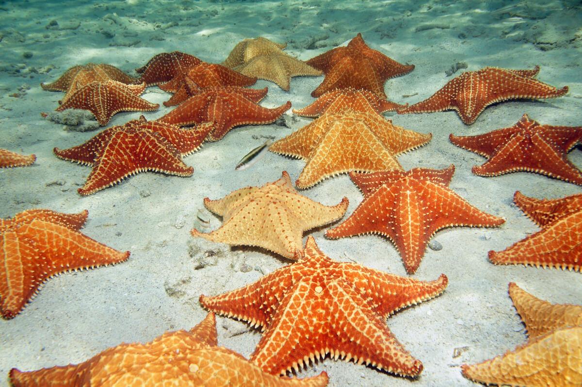 Un fondo cubierto de estrellas marinas.