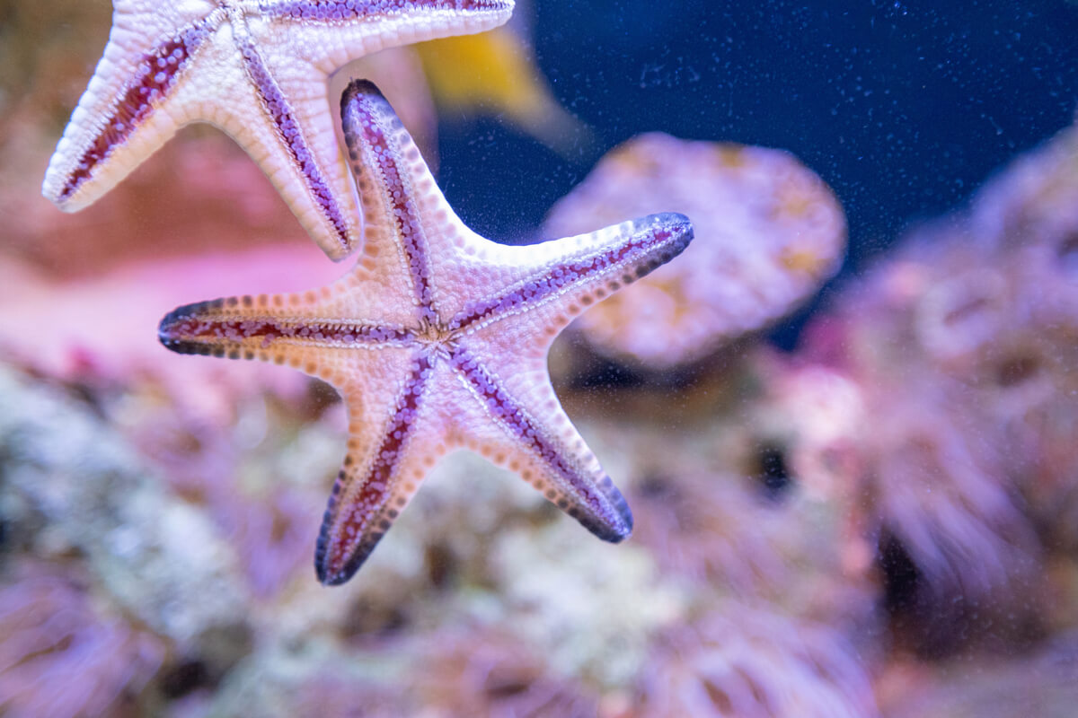 Estrellas marinas de color blanco.