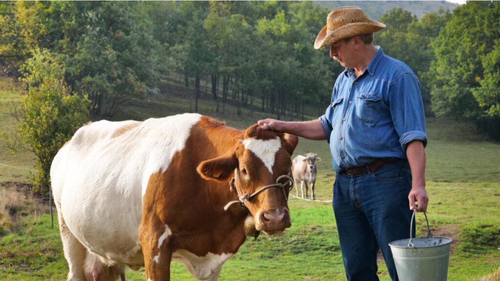 Micotoxinas y producción animal