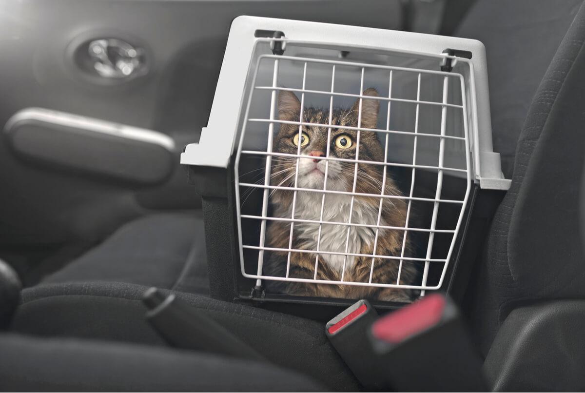 Un gato en un transportín dentro de un coche.