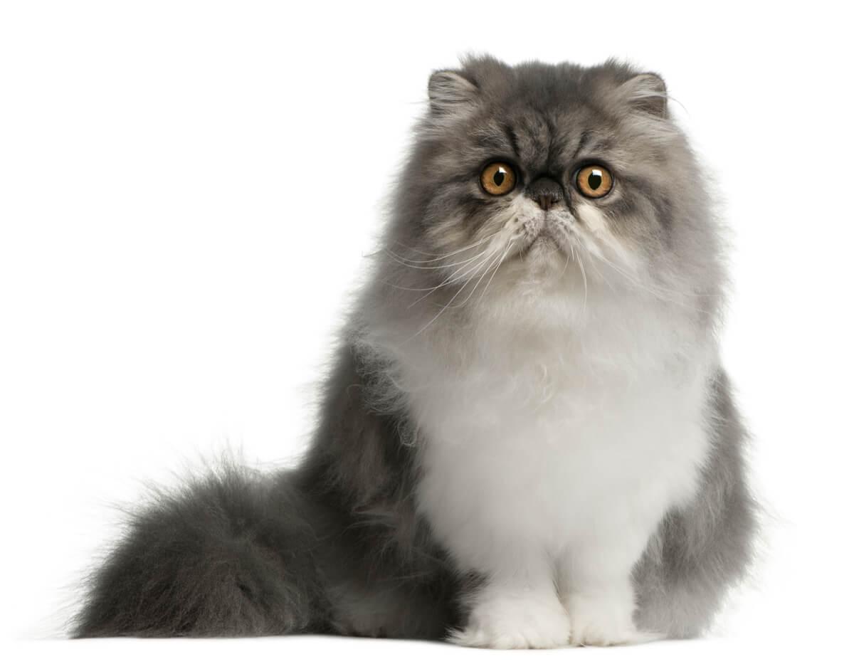 Los gatos no lloran.