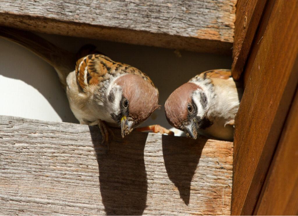 ¿Cómo ahuyentar pájaros?