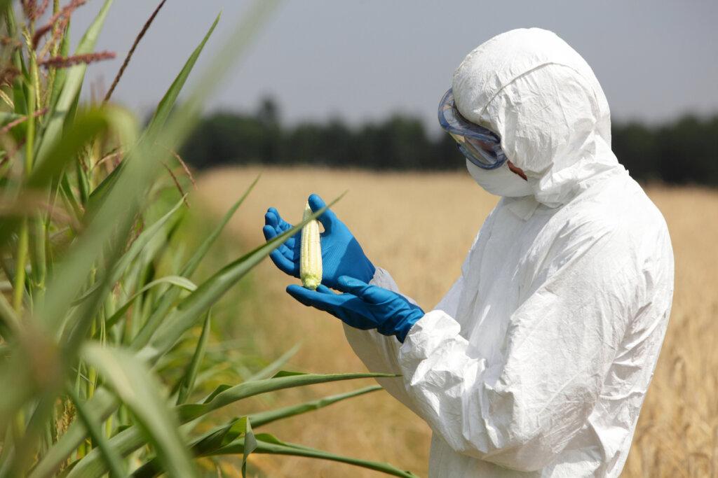 Efectos de los cultivos transgénicos sobre la biodiversidad