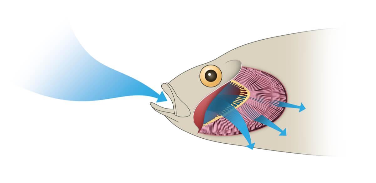 Un pez respirando.