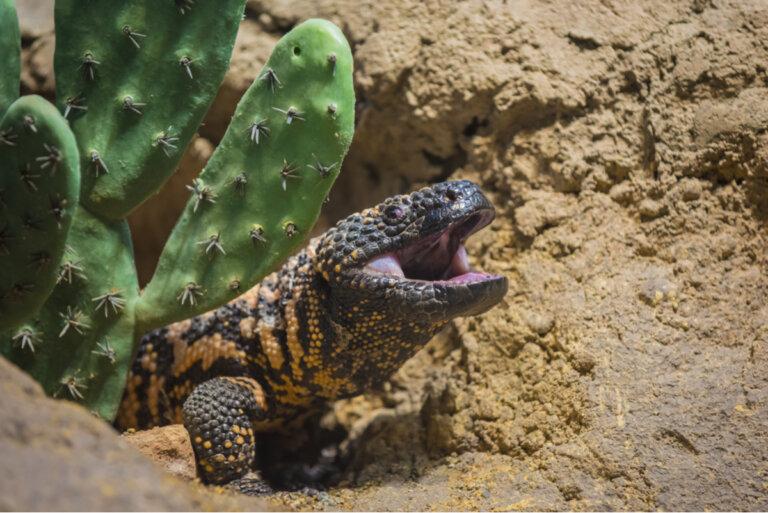 ¿Existen los lagartos venenosos?