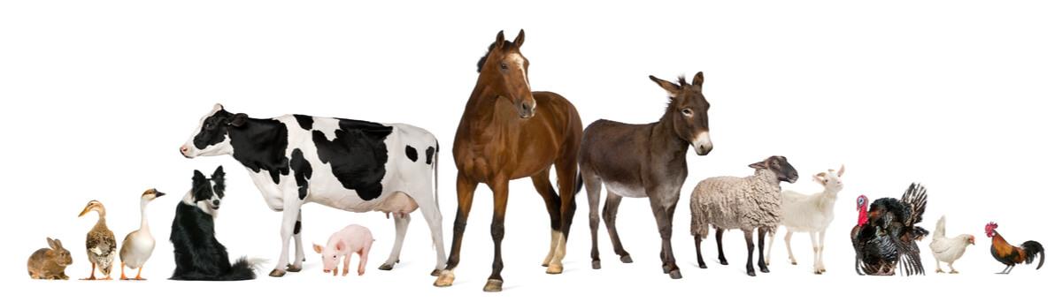 Morfotipos animales sobre un fondo blanco.