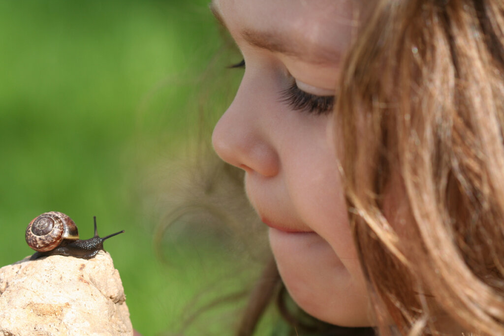 Helicultura y apicultura, producciones animales alternativas