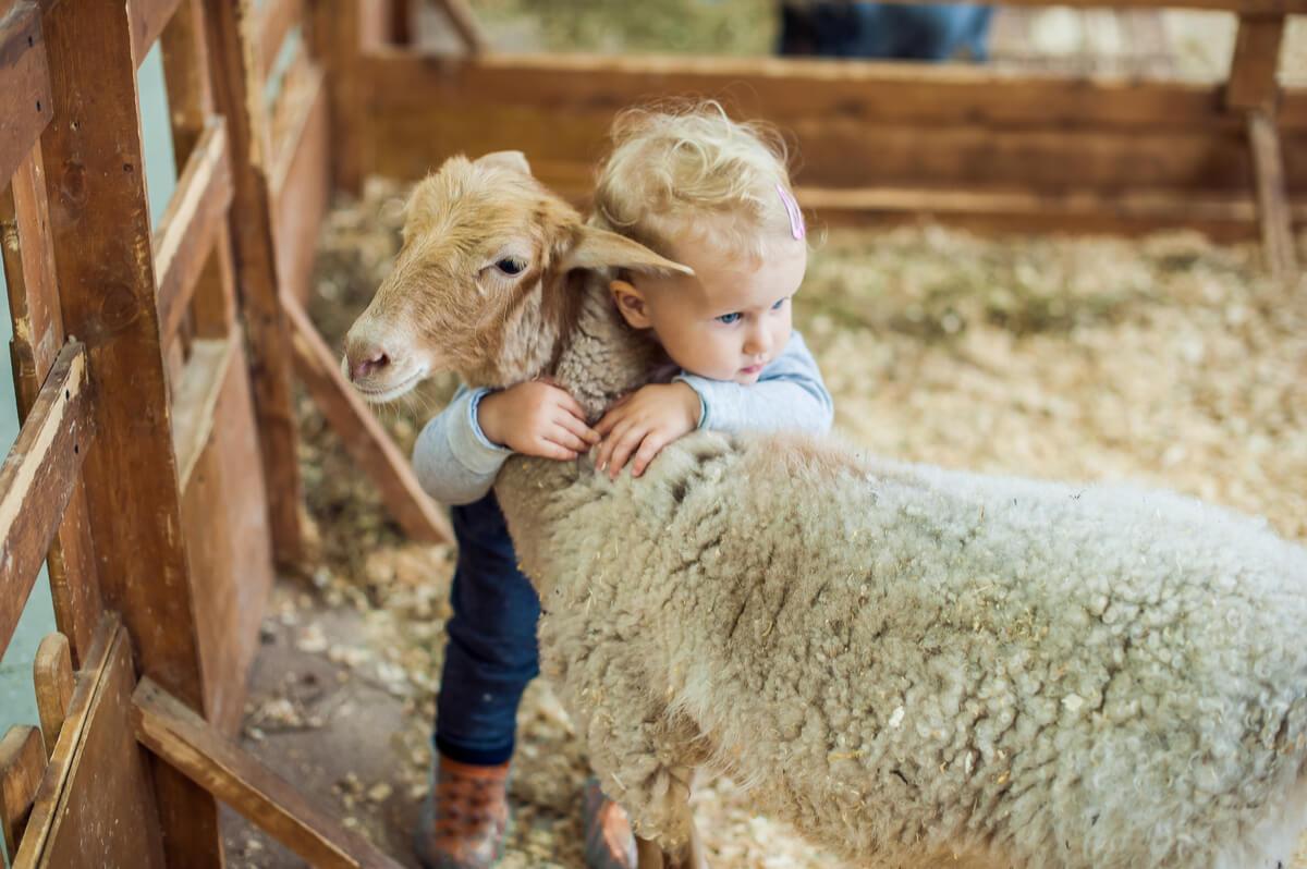 Un niño abrazando a una oveja.