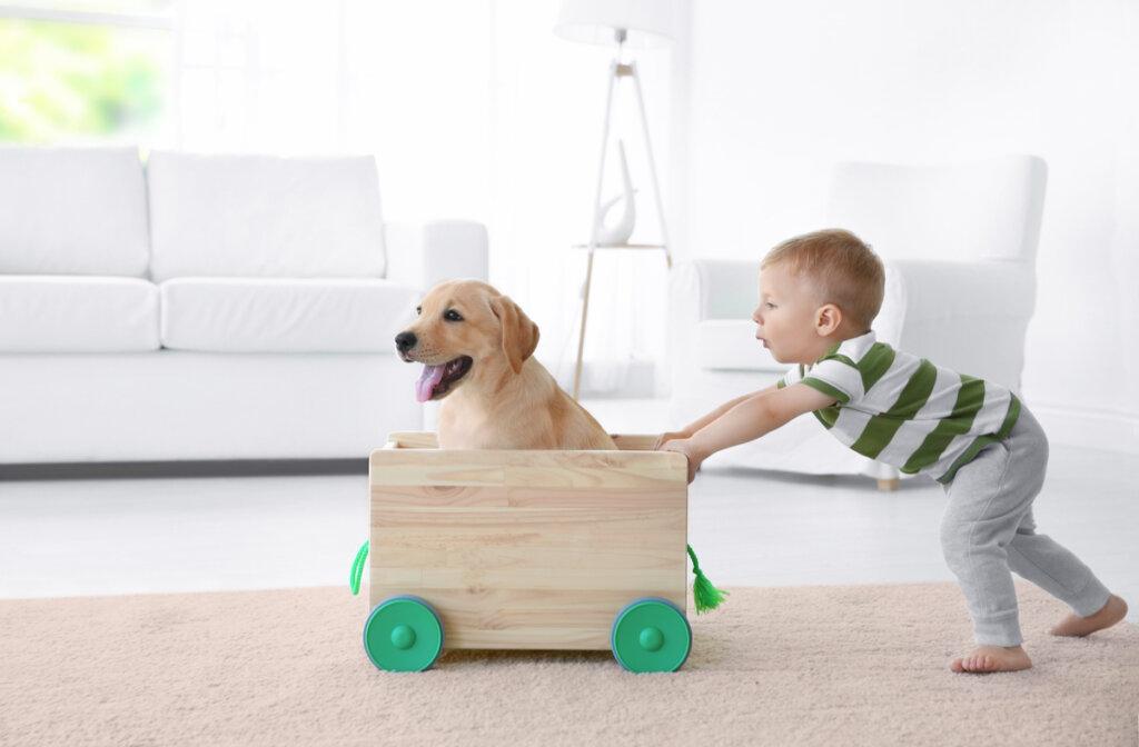 Juguetes hechos con materiales reciclados para mascotas