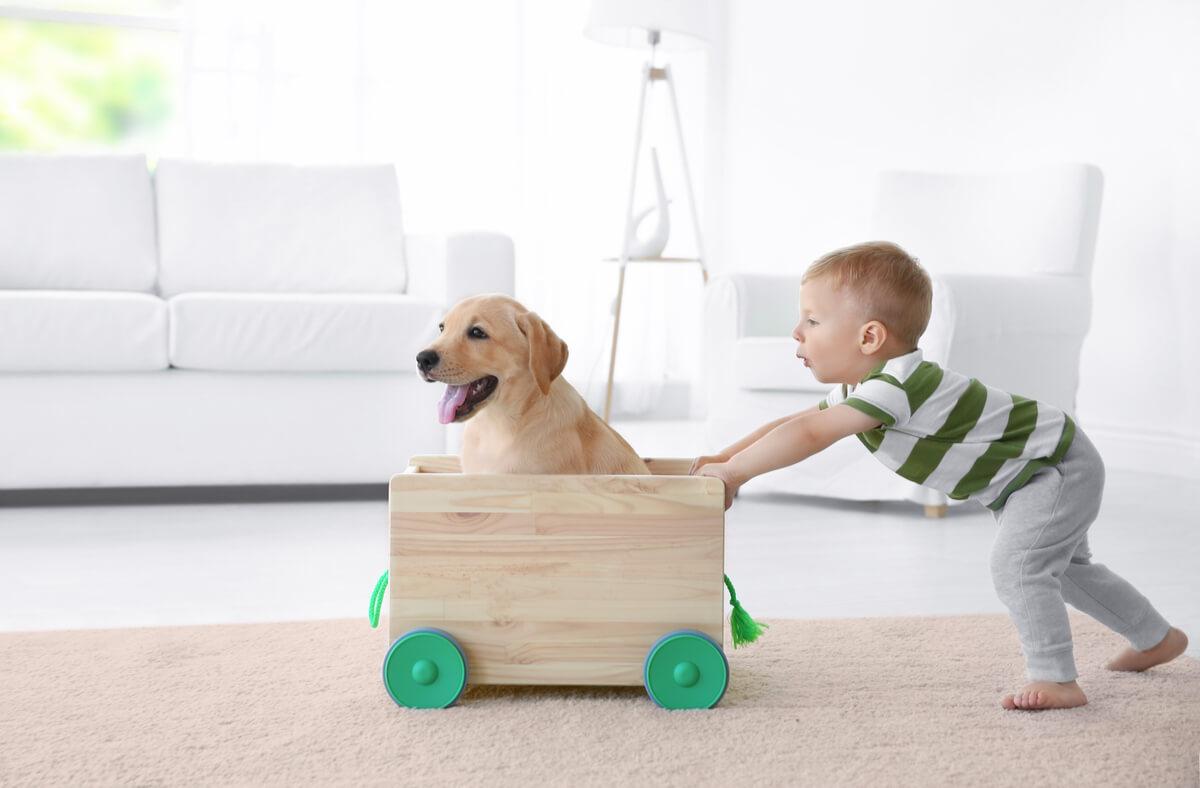 Un garçon tirant une charrette avec un Labrador à l'intérieur.