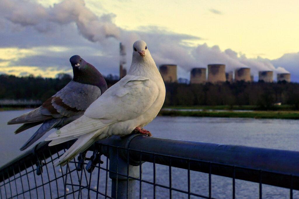 ¿Cómo afecta la polución a los pájaros?
