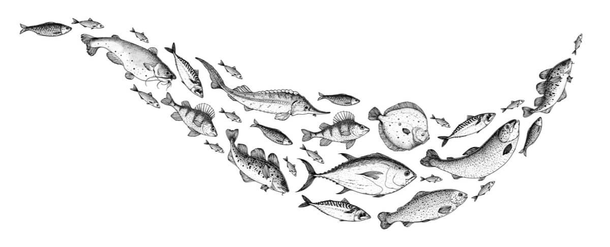 Un dibujo de peces de río en blanco y negro.