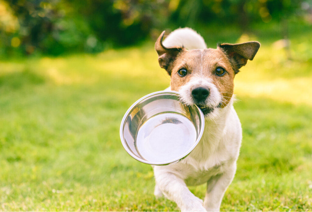 ¿Cuántas veces debe comer un perro al día?