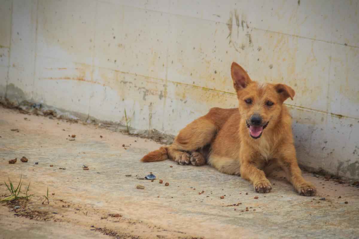 Un perro callejero contento.