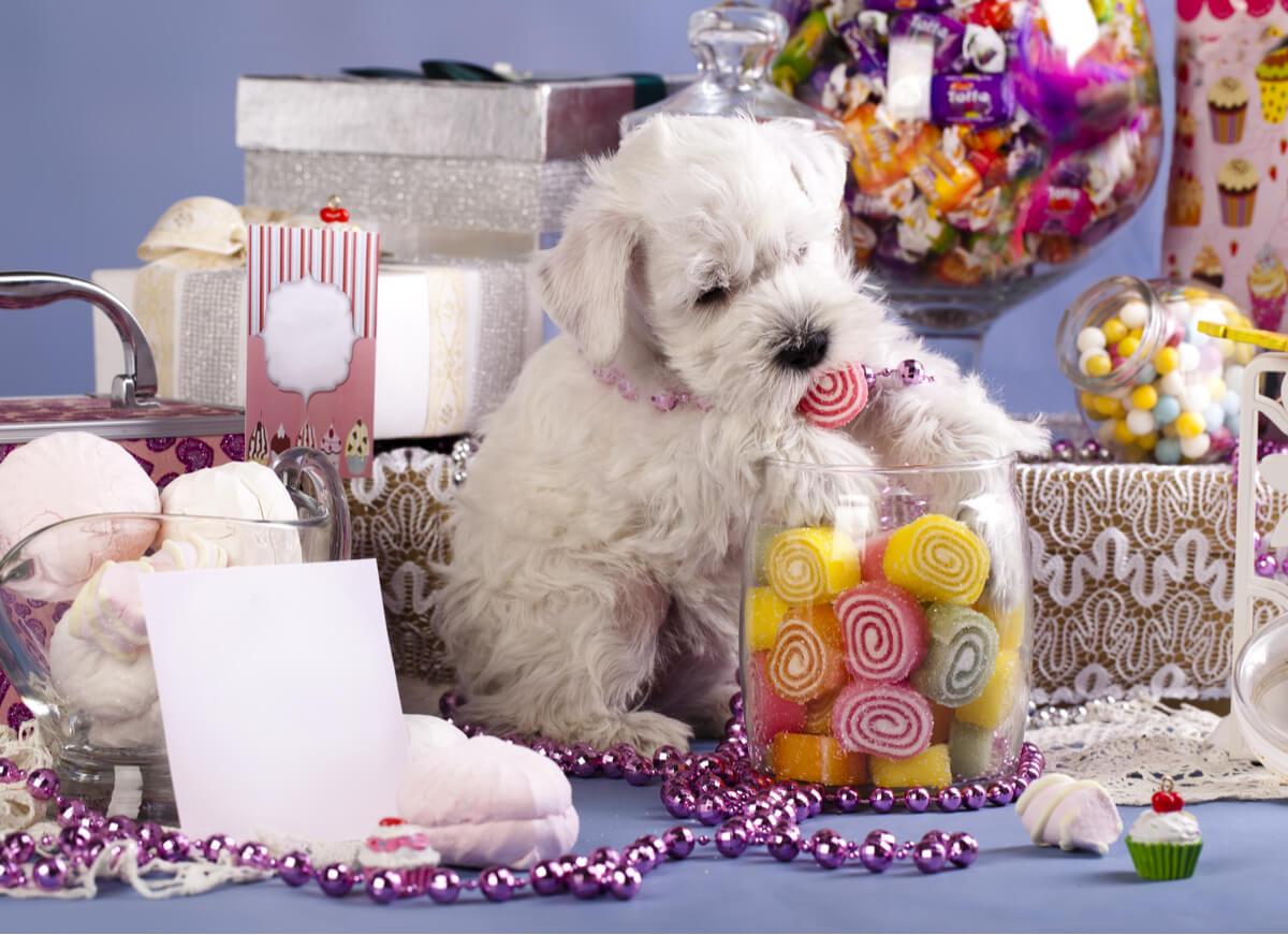Un perro comiendo chuches.