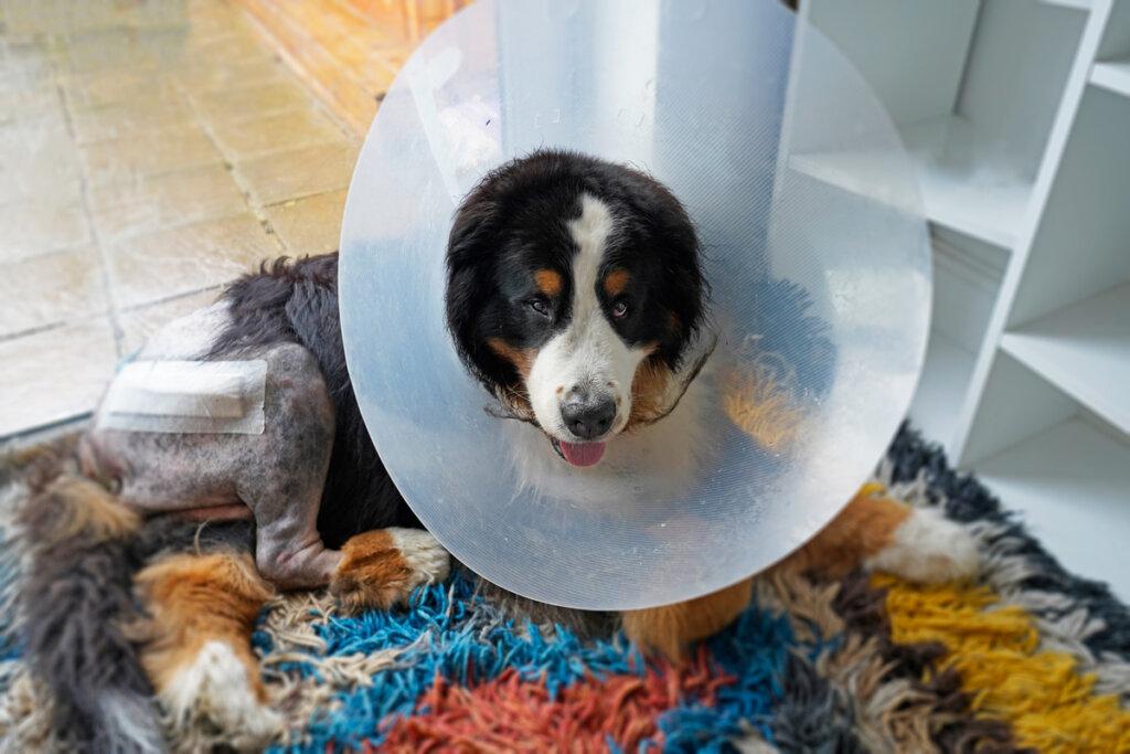 Tumores benignos en perros: siete cosas que debes saber