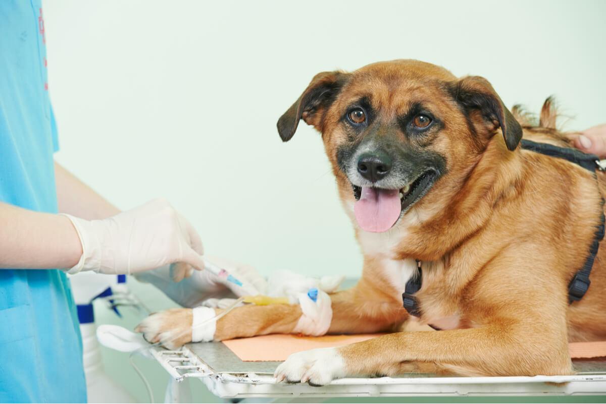 Un perro en el veterinario.