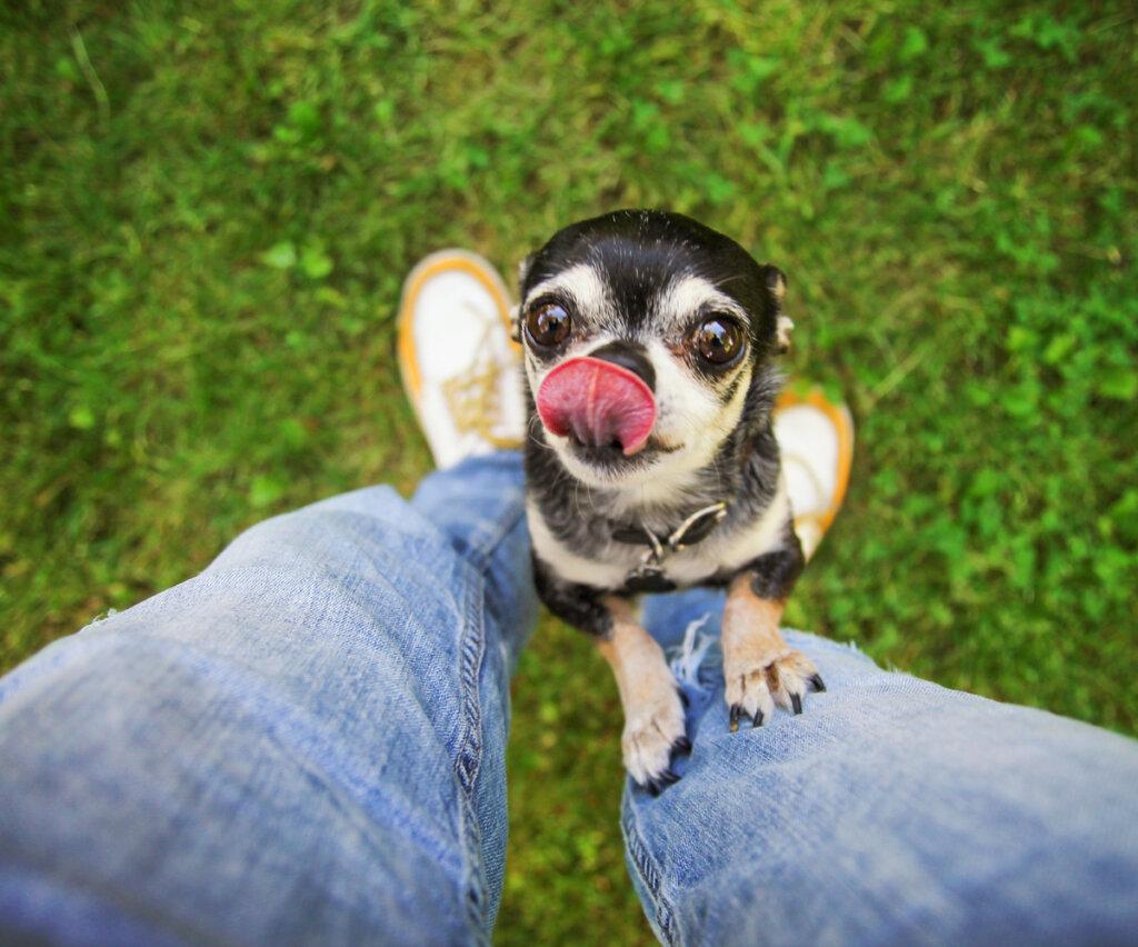 ¿Qué es un perro velcro?