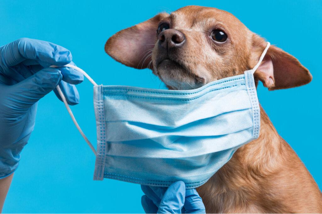 Las tres enfermedades bacterianas más comunes en perros