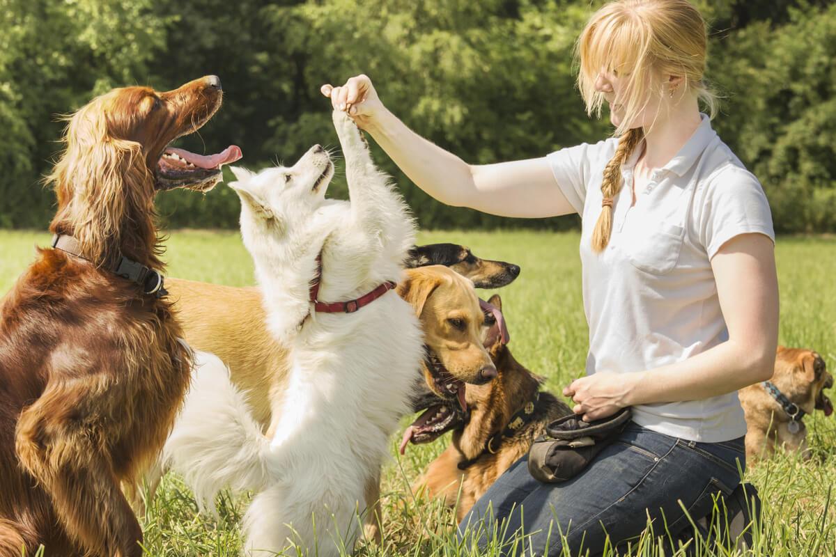 Para que un perro no ladre mucho hay que entrenarlo.