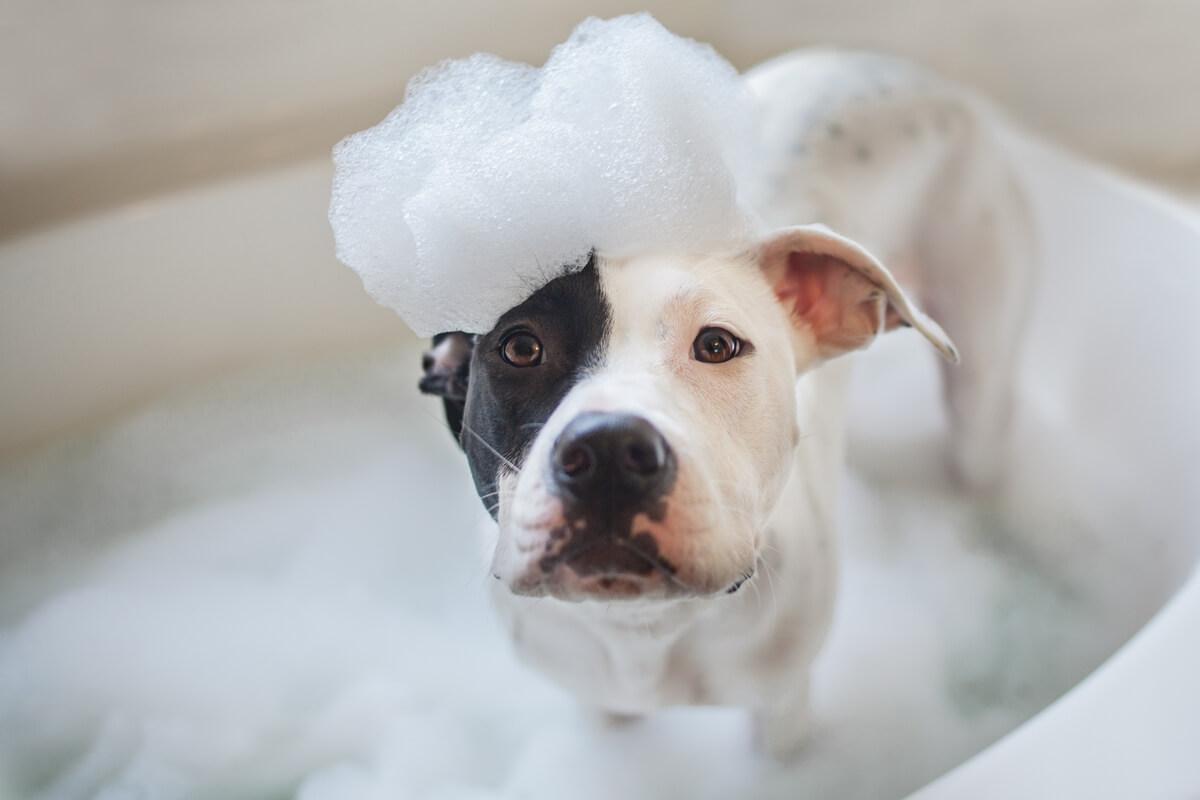 Un perro en la hora del baño.