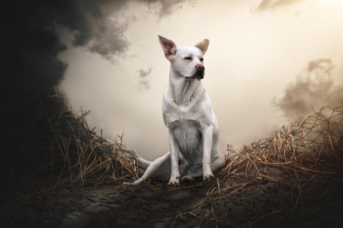 Un perro posando sobre una superficie calcinada.