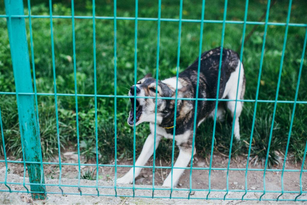Cinco consejos para hacer que un perro no ladre mucho