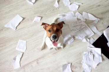 Ocho consejos para cuidar un perro en casa
