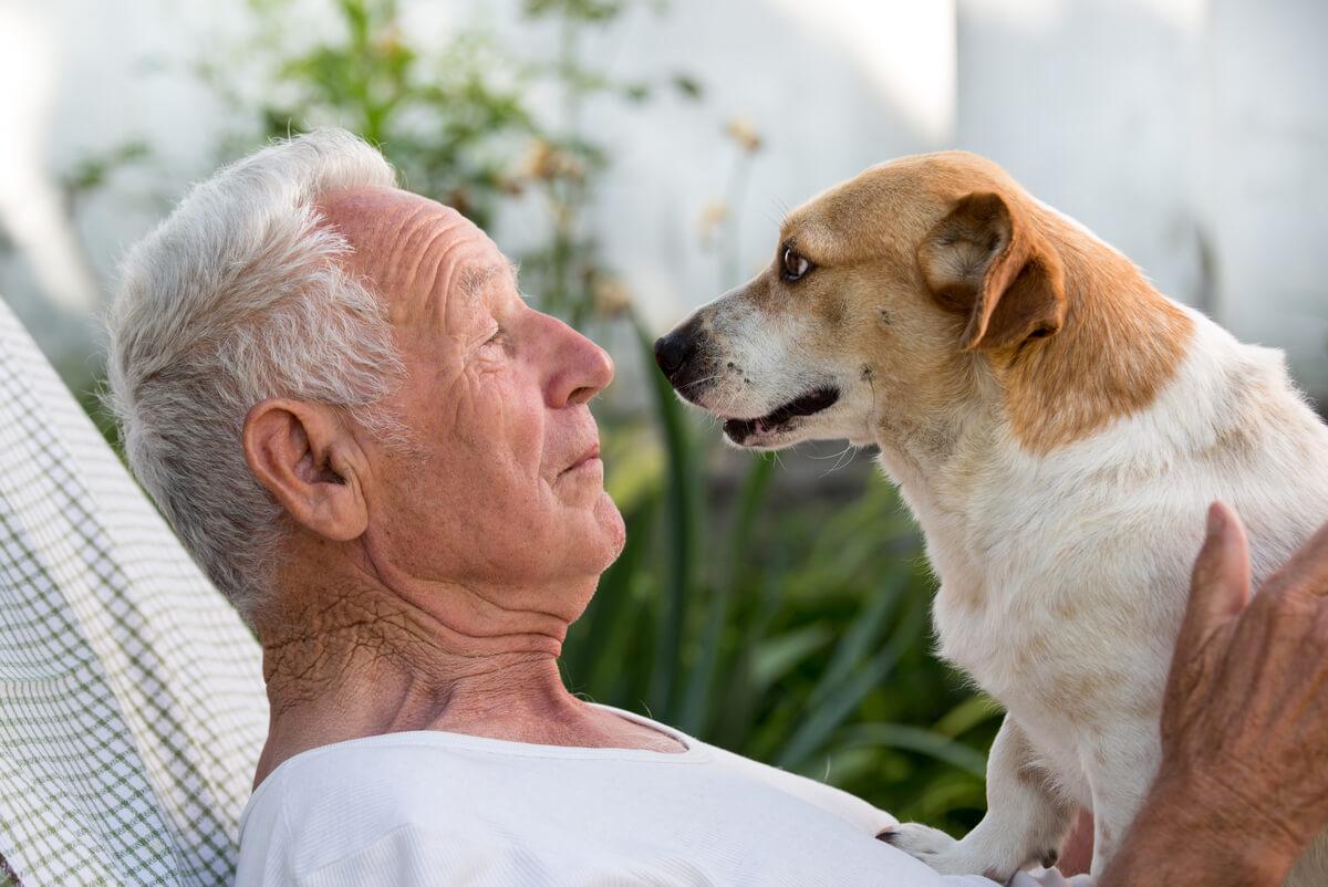 Un perro mirando a su tutor.