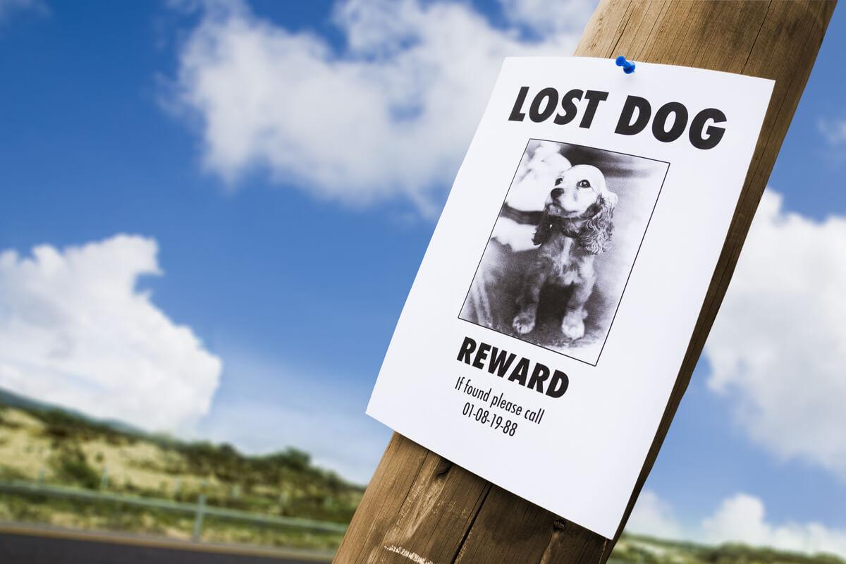 Perros rescatados y perdidos.