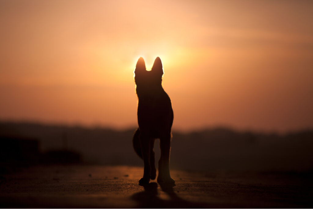 ¿Son los perros conscientes de la muerte?